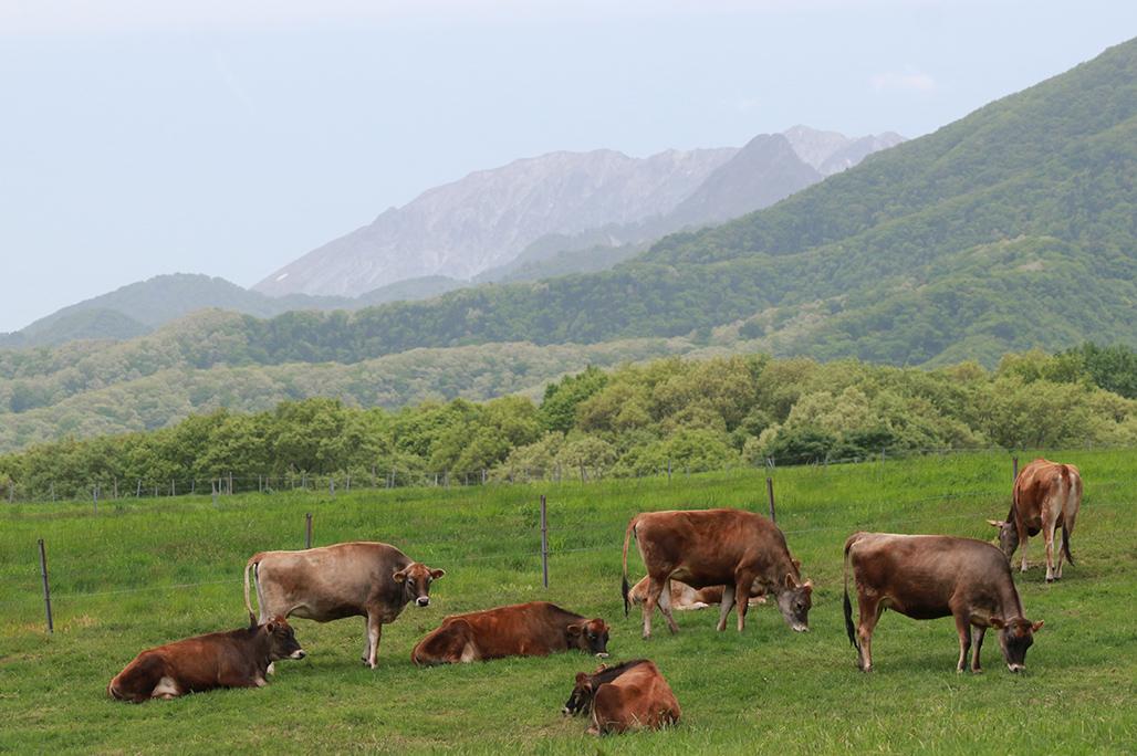 時間が止まったような牛と大山の景色